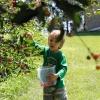 cherries201506