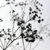 notaflower